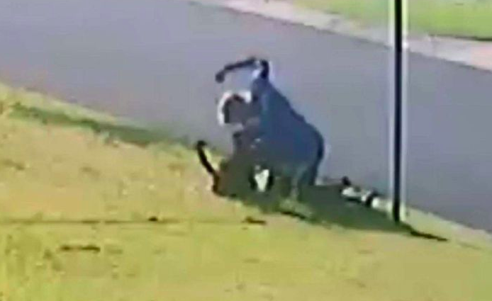 The man repeatedly strikes the dog, appearing to connect with its stomach and head. Source: RSPCA QLD