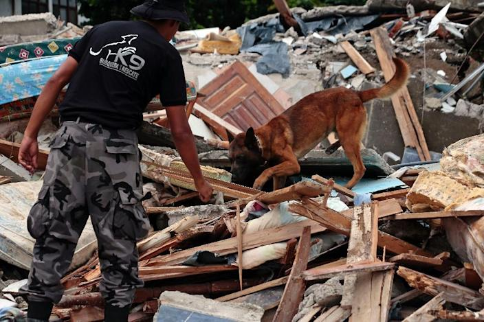 A rescuer with his sniffer dog searches for quake victims amid the ruins of a collapsed hotel in Ecuador (AFP Photo/Juan Cevallos)