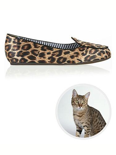 """<div class=""""caption-credit""""> Photo by: net-a-porter</div><b>California Spangled Cat</b> <br> We believe one of the greatest trends this season is taken from the California Spangled cat. While some say leopard, we think this spotted feline says otherwise. Charles Philip Shanghai Oil Leopard-Print Satin Slippers, $160; <a href=""""http://www.net-a-porter.com/us/en/product/324319"""" rel=""""nofollow noopener"""" target=""""_blank"""" data-ylk=""""slk:net-a-porter.com"""" class=""""link rapid-noclick-resp"""">net-a-porter.com</a>. <p> <b><a href=""""http://www.marieclaire.com/celebrity-lifestyle/articles/pop-culture-holiday-traditions?link=rel&dom=yah_life&src=syn&con=blog_marieclaire&mag=mar"""" rel=""""nofollow noopener"""" target=""""_blank"""" data-ylk=""""slk:Related: The Best of Holiday Pop Culture Traditions"""" class=""""link rapid-noclick-resp"""">Related: The Best of Holiday Pop Culture Traditions</a> <br> <a href=""""http://www.marieclaire.com/celebrity-lifestyle/hot-actors-then-and-now?link=rel&dom=yah_life&src=syn&con=blog_marieclaire&mag=mar"""" rel=""""nofollow noopener"""" target=""""_blank"""" data-ylk=""""slk:Related: 10 Hot Men: Then and Now"""" class=""""link rapid-noclick-resp"""">Related: 10 Hot Men: Then and Now</a></b> </p>"""