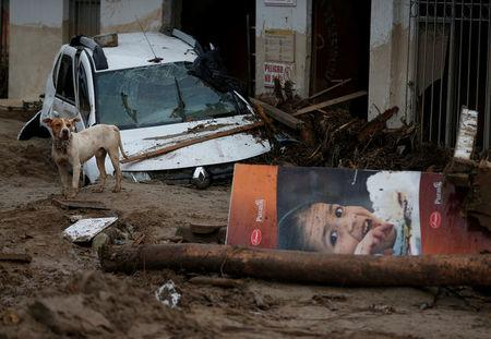 A dog is seen on a street destroyed after flooding and mudslides caused by heavy rains leading several rivers to overflow, pushing sediment and rocks into buildings and roads in Mocoa