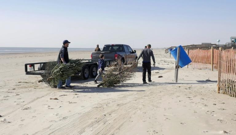 Volunteers in Surfside Beach unload recycled Christmas trees to be used to form a natural barrier to protect sensitive sand dunes