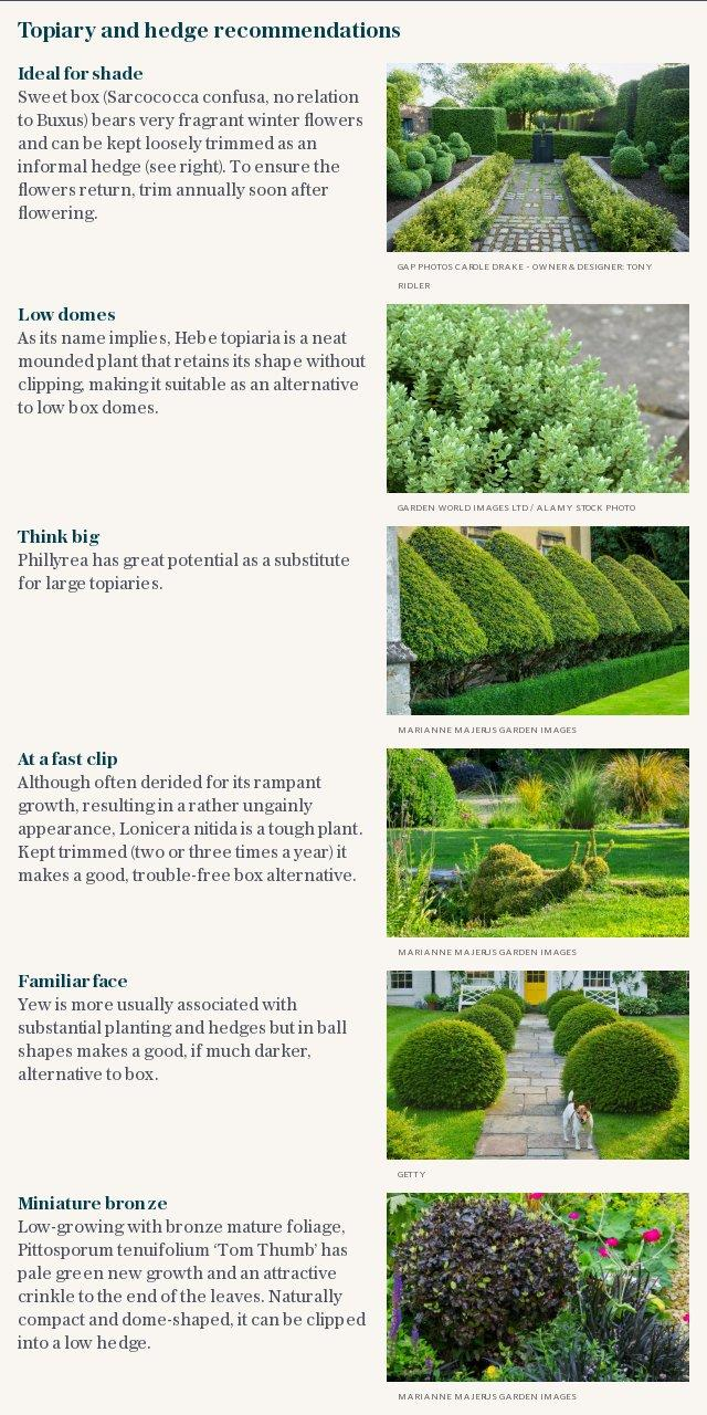 Topiary and hedge recommendations