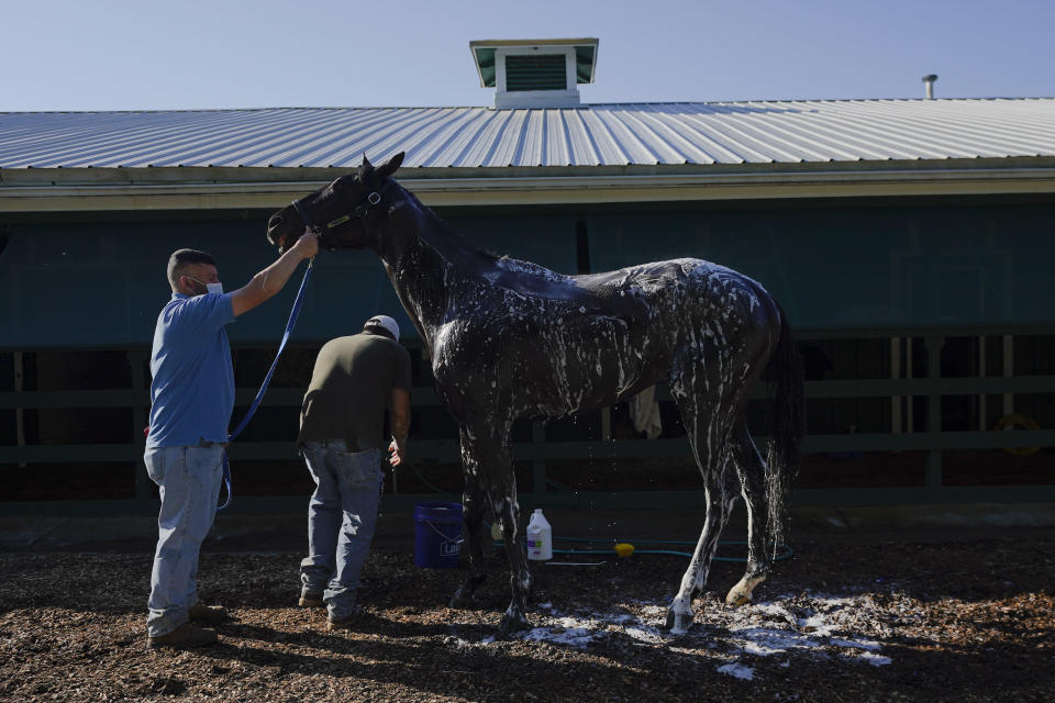 Kentucky Derby winner Medina Spirit is groomed after a morning exercise at Pimlico Race Course ahead of the Preakness Stakes horse race, Tuesday, May 11, 2021, in Baltimore. (AP Photo/Julio Cortez)