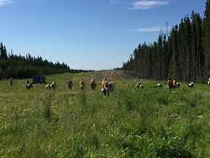 Treetime Services planting crew work to reforest a pipeline right of way in Northeast Alberta near Lac La Biche. Photo credit: Supplied by Project Forest