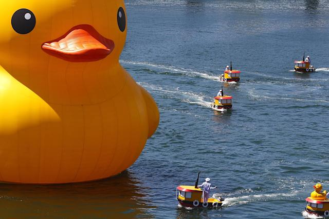 SYDNEY, AUSTRALIA - JANUARY 05: Dutch artist Florentijn Hofman's giant Rubber Duck enters Cockle Bay Wharf on opening day of the Sydney Festival January 5, 2013 in Sydney, Australia. Sydney festival opening, previously 'Sydney Festival First Night', was scaled back from previous years, when crowds reached as many as 60,000 for the launch. (Photo by Marianna Massey/Getty Images)
