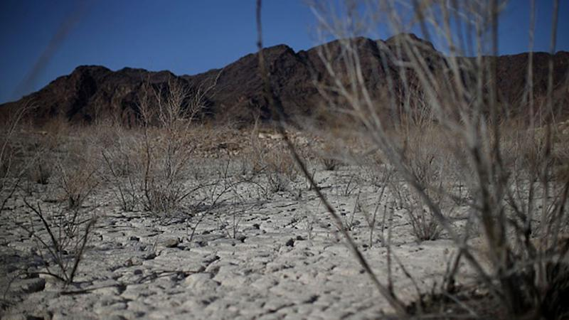 Dead brush stands on what used to be the bottom of Lake Mead near Boulder Beach on May 13, 2015 in Lake Mead National Recreation Area, Nevada. Photo: Getty