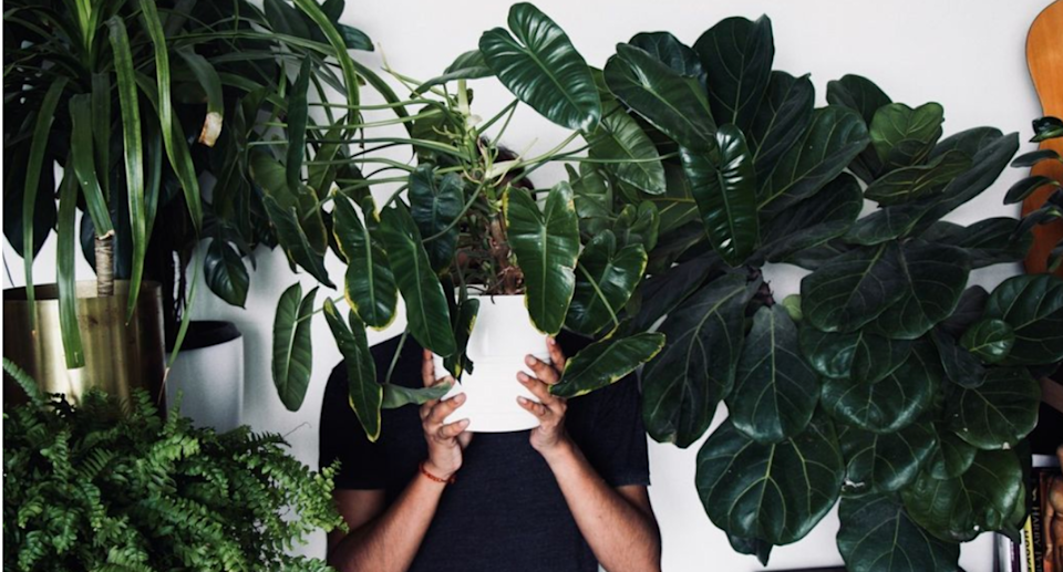 man holding plant in white pot in front of his face surrounded by green plants in pots