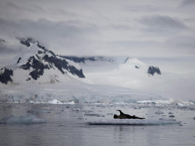 A seal rests on a small piece of ice floating in the Antarctic: Reuters