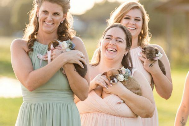 PHOTO: The Krasinskis told 'GMA' that two of the puppies from the litter of ten have already been spoken for by guests who want to adopt them. (Cami Zi Photography)