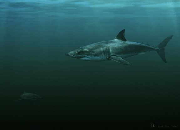This artist's rendering shows how a new extinct white shark species, Carcharodon hubbelli, may have looked.