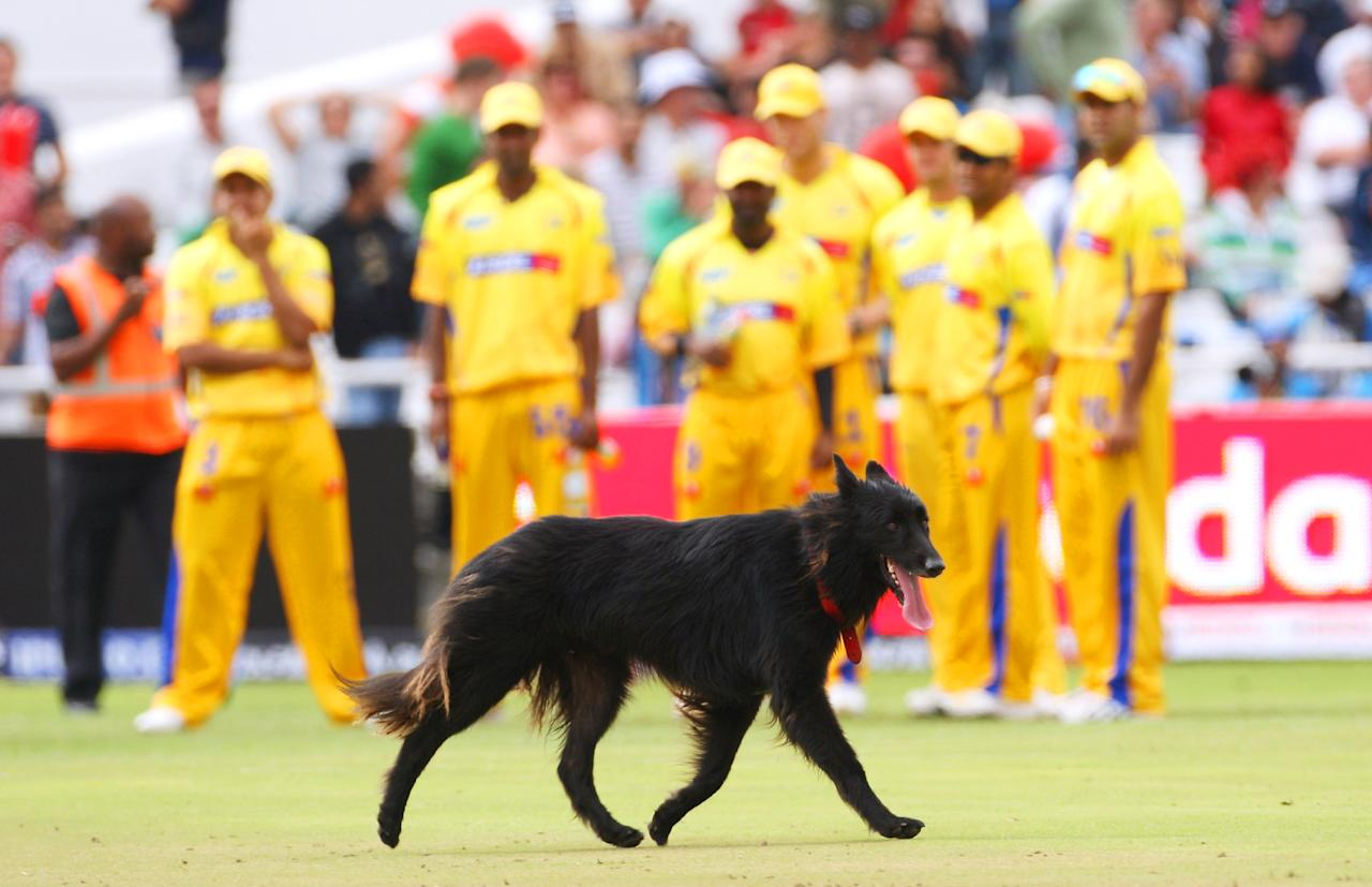 CAPE TOWN, SOUTH AFRICA - APRIL 18:  A dog strays on to the field during the IPL T20 match between Mumbai Indians and Chennai Super Kings at Newlands Cricket Ground on April 18, 2009 in Cape Town, South Africa.  (Photo by Tom Shaw/Getty Images)