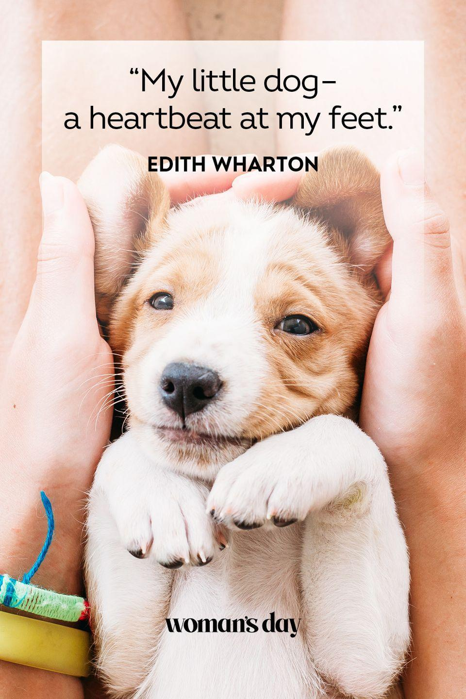 """<p>""""My little dog – a heartbeat at my feet.""""</p>"""