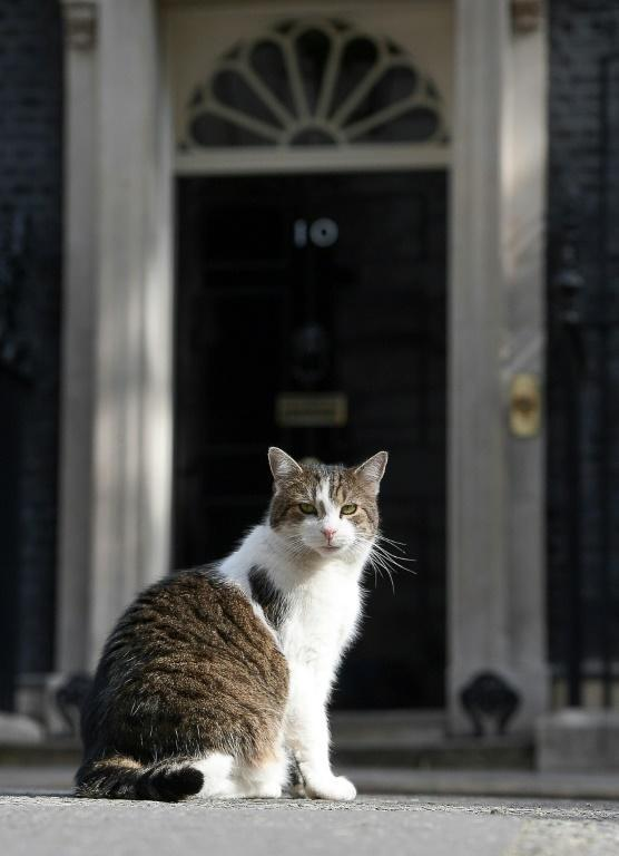 Chief Mouser Larry has served three prime ministers in his decade at Downing Street