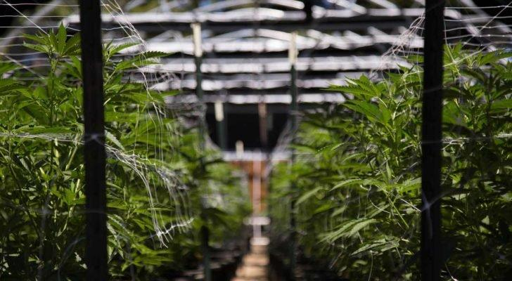 Aurora Cannabis Stock Holders Continue to Suffer Huge Goodwill Effects