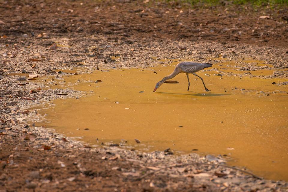 bird in a drought in brazil (Lucas Ninno/ Moment/ Getty Images)