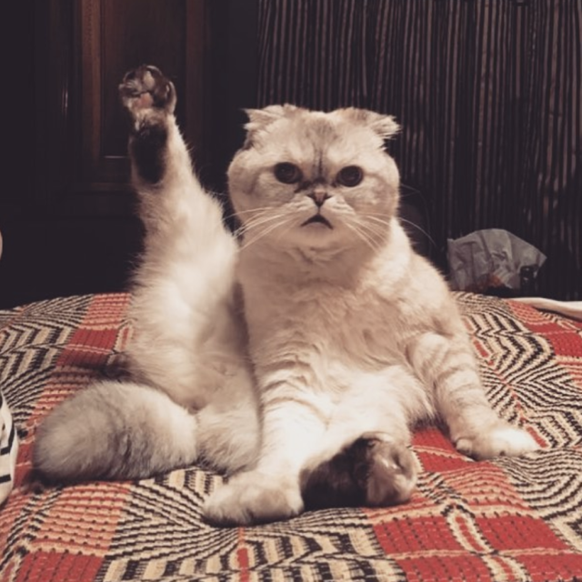 "<p>Tay Tay's social media presence is limited these days, so we'll take what we can get. And what we can get today is a shot of Taylor's cat Olivia Benson, showing us how she's getting ready for some upcoming shows. ""We are all stretching to prep for that tour choreo,"" the singer captioned this cute pic. (Photo: <a href=""https://www.instagram.com/p/Be1MpfPHfz3/?taken-by=taylorswift"" rel=""nofollow noopener"" target=""_blank"" data-ylk=""slk:Taylor Swift via Instagram)"" class=""link rapid-noclick-resp"">Taylor Swift via Instagram)</a> </p>"