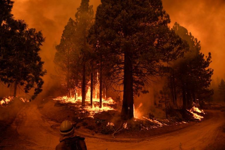 Parts of the Sequoia National Forest have burned in the most recent blazes (AFP/Patrick T. FALLON)