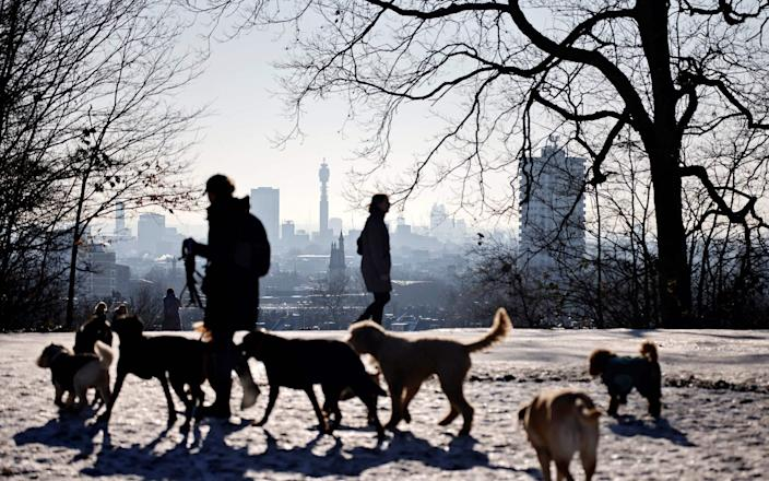 Britain has seen an explosion in the number of dog thefts since the coronavirus pandemic and resulting lockdowns started early last year, as demand for pets has surged - AFP
