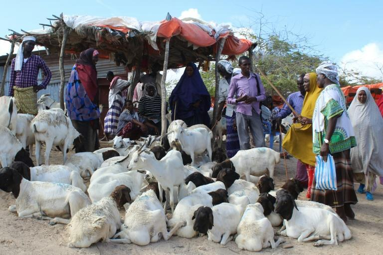 People buy sacrificial sheep and goats for the Muslim festival Eid (AFP Photo/STR)