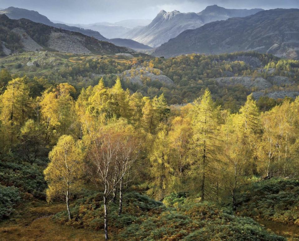 <p>Robert Macfarlane, who wrote the foreword to the book, is a leading writer on landscape, language, nature and environmentalism.<br>(Masters of Landscape Photography) </p>