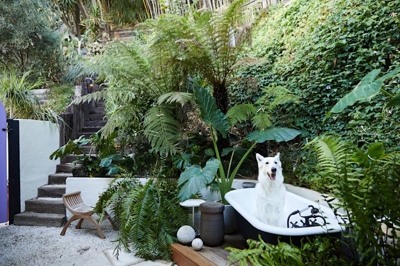 """Robi, looking unfazed at the prospect of a bath, inside the garden's vintage bathtub. The stairs in the background lead to an elevated deck with lounge seats. Sarita Jaccard designed the lush landscape. Bennett bought the vintage bathtub on Craigslist, """"for about $100,"""" and had it reglazed."""