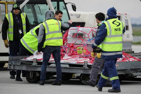 A cage with Dobrila, a female griffon vulture is unloaded after arriving at the Nikola Tesla Airport in Belgrade, Serbia, April 12, 2019. REUTERS/Marko Djurica