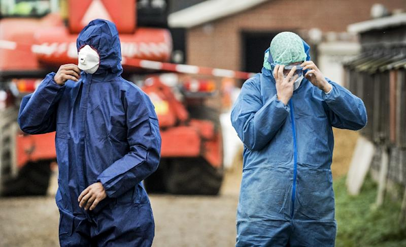 Workers in protective gear get ready to cull ducks as part of prevention measures against bird flu at a duck farm in Hierden, central Netherlands on November 27, 2016