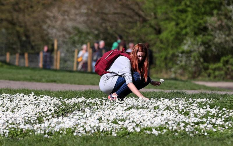 Sunny Sunday: A woman picks daisy's in the sunshine on Hampstead Heath (PA)