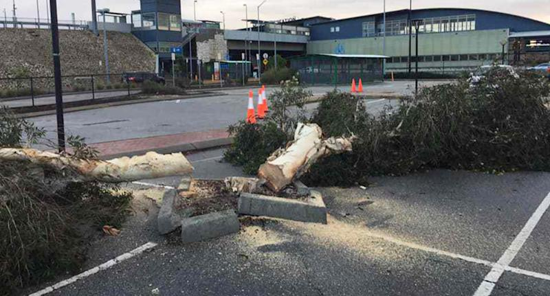 A photo taken at the Murdoch train station car park showing two trees cut down with some cones around them.