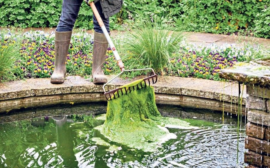 Warm weather and sunshine can send pond weed into overdrive - GAP Photos / Jonathan Buckley