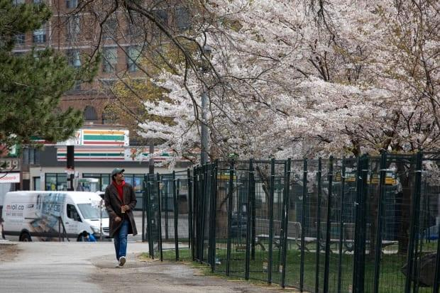 Torontonians enjoy cherry blossoms in Bellwoods Park on Earth Day, Apr. 22, 2021.