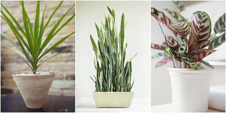 <p>These low-light varieties won't want anything to do with your already crowded windowsill. </p>