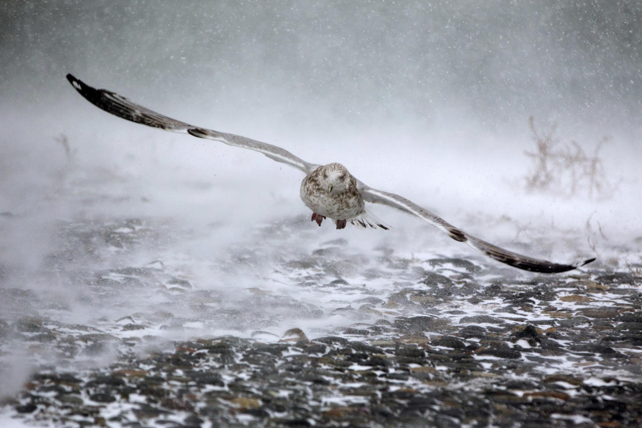 <p>El vuelo de un ave en medio de la tormenta en Hull, Massachusetts. (Photo: Scott Eisen/Getty Images) </p>