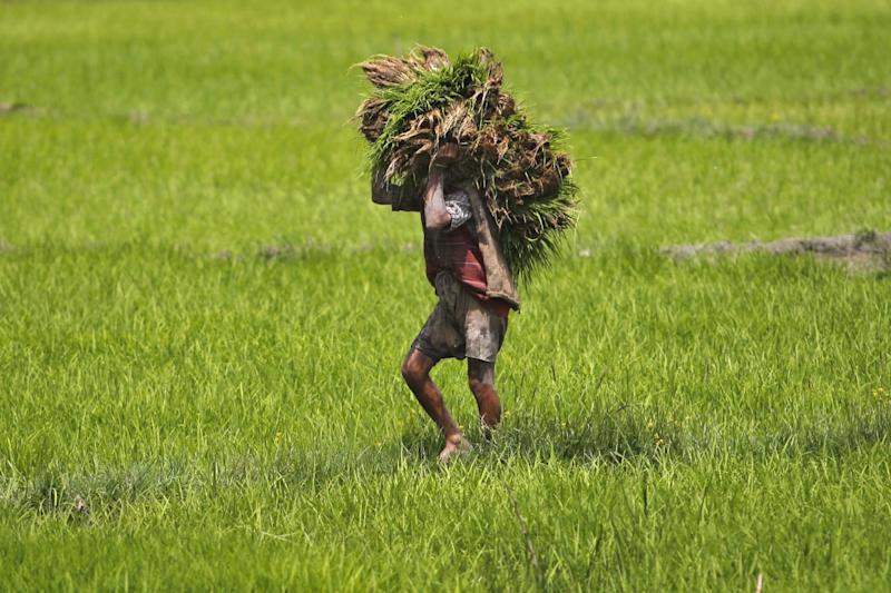 Agriculture Exports Rise by 43.4 percent in April-Sept Period, Says Govt