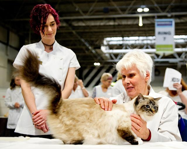 <p>Cat participates in the GCCF Supreme Cat Show at National Exhibition Centre on October 28, 2017 in Birmingham, England. (Photo: Shirlaine Forrest/WireImage) </p>