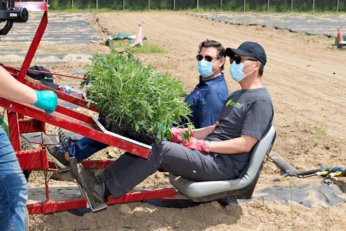 WeedMD CEO Angelo Tsebelis (left) and Stephen Ng, chief commercial officer planting 18,000 plants in Strathroy, Ont. (Provided)