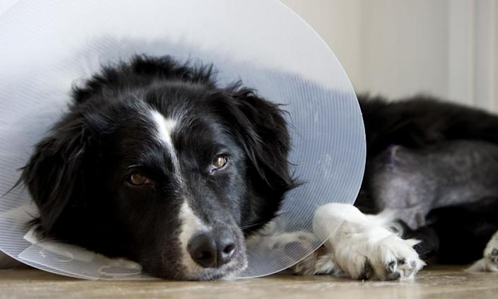 A poorly dog