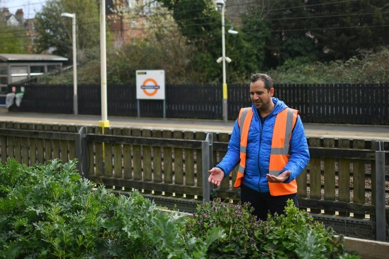 Founder of Energy Garden, Agamemnon Otero, tends to a herb and vegetable section near the platform at Brondesbury Park Overground train station in north west London