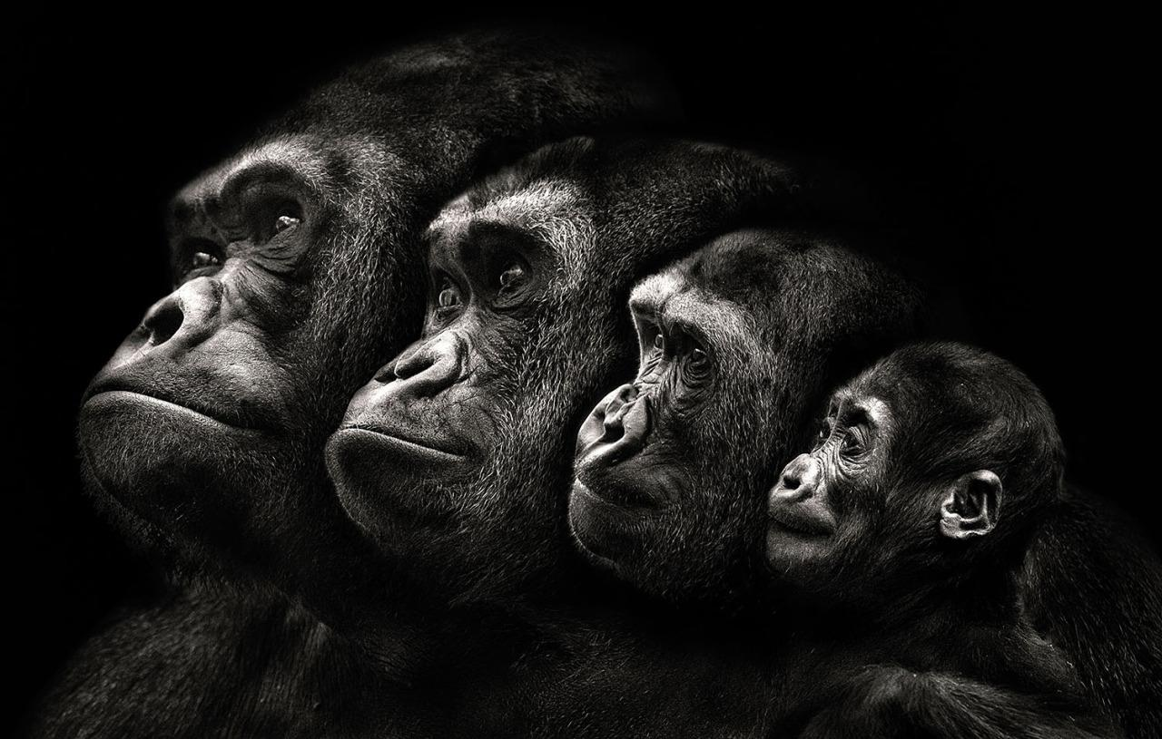 A family of apes. (Photo: Pedro Jarque Krebs/Caters News)