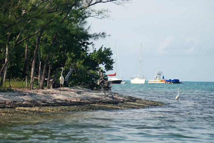 Wisteria Island in Key West Harbor has so far been left undeveloped as the city has become a major tourist destination.