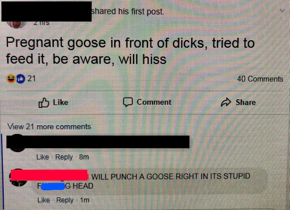old person saying they will punch a goose in its stupid head