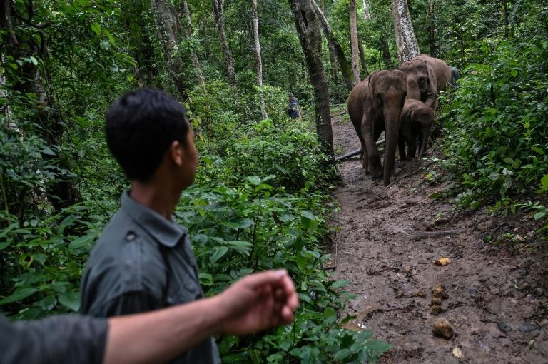 A Xishuangbanna elephant national park has been proposed by Chinese scientists, but it would require the expensive and politically tricky task of reclaiming farmland and relocating hundreds of thousands of residents to link up pockets of habitat