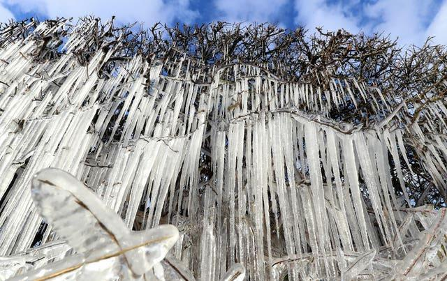 Icicles form on a hedgerow near Ashford in Kent