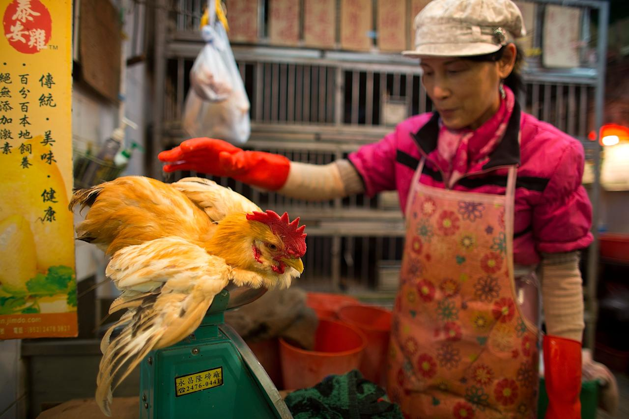 HONG KONG - APRIL 12:  A vendor weighs a live chicken at the Kowloon City Market on April 12, 2013 in Hong Kong. Local authorities have stepped up the testing of live poultry imports from China to include a rapid test for the H7N9 'bird flu' virus. Measures were put in place as the tenth victim of the influenza strain was confirmed in mainland China yesterday.  (Photo by Lam Yik Fei/Getty Images)