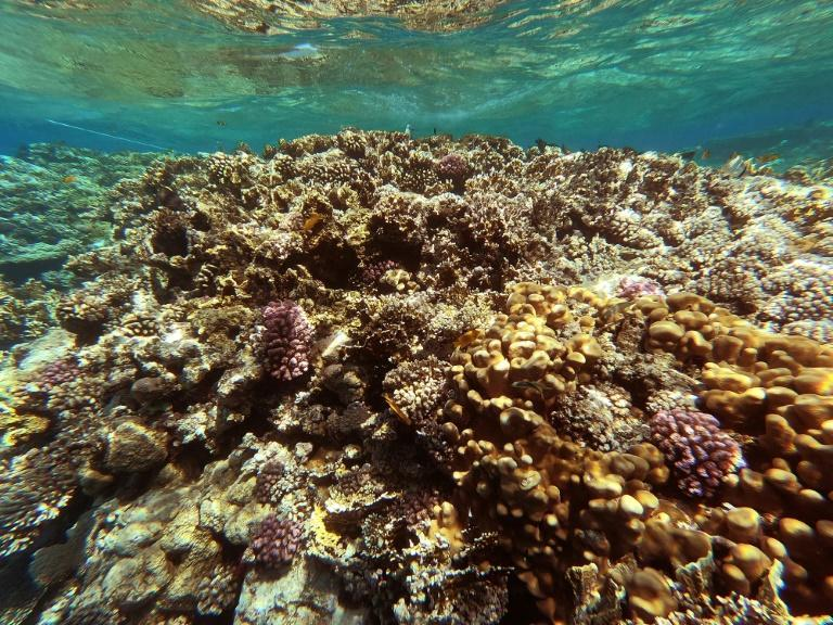 The Red Sea is home to some 209 different types of coral reefs, according to Egypt's environment ministry (AFP/Khaled DESOUKI)