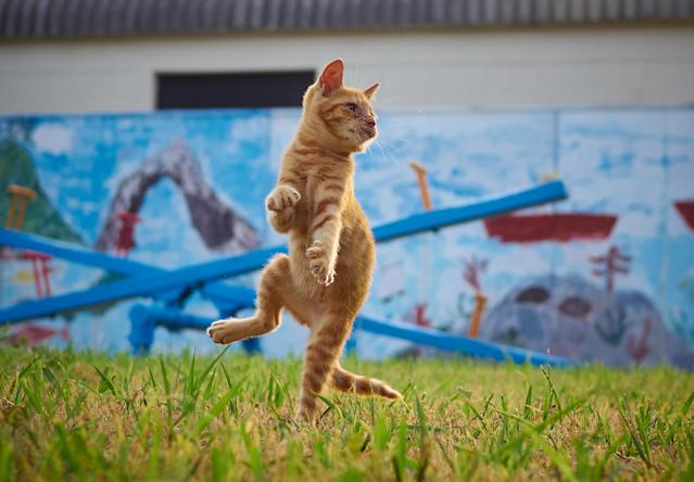 <p>The cats pose like heroes — or martial artists and ninjas. (Photo: Hisakata Hiroyuki/Caters News) </p>