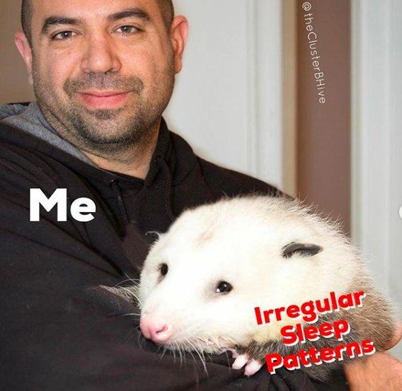 "Image of a person holding a possum with the words ""Me"" over the person and ""Irregular Sleep Patterns"" over the possum."