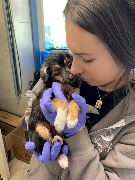 Puppy Found Covered in Chemical Burns and Dumped in Trash