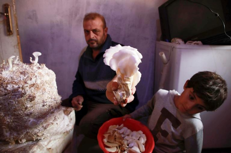 Nasrallah (L) and his son Saeed harvest mushrooms in the darkened room they use to grow the fungi in a camp in the town of Haarem in northwestern Idlib province in November