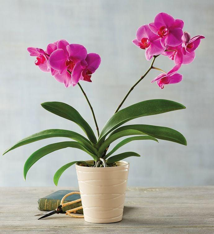 <p>Believe it or not, this <span>Pink Orchid</span> ($60) naturally absorbs carbon dioxide and releases oxygen into the air, meaning you'll be breathing easy with this pick.</p>